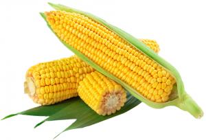 Кукуруза в початках 2 шт.в/у