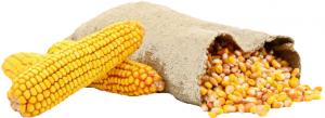 Кукуруза зерно с/м вес.~2.5кг
